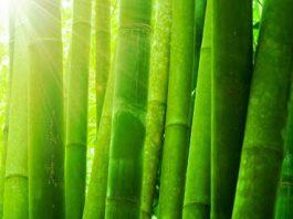 Cotton-Bamboo