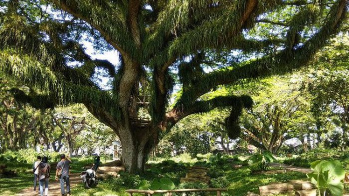 banyuwangi hutan lord of the rings